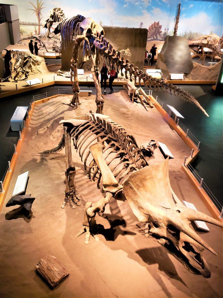 Recreación de los dinosaurios en el museo Tyrrell
