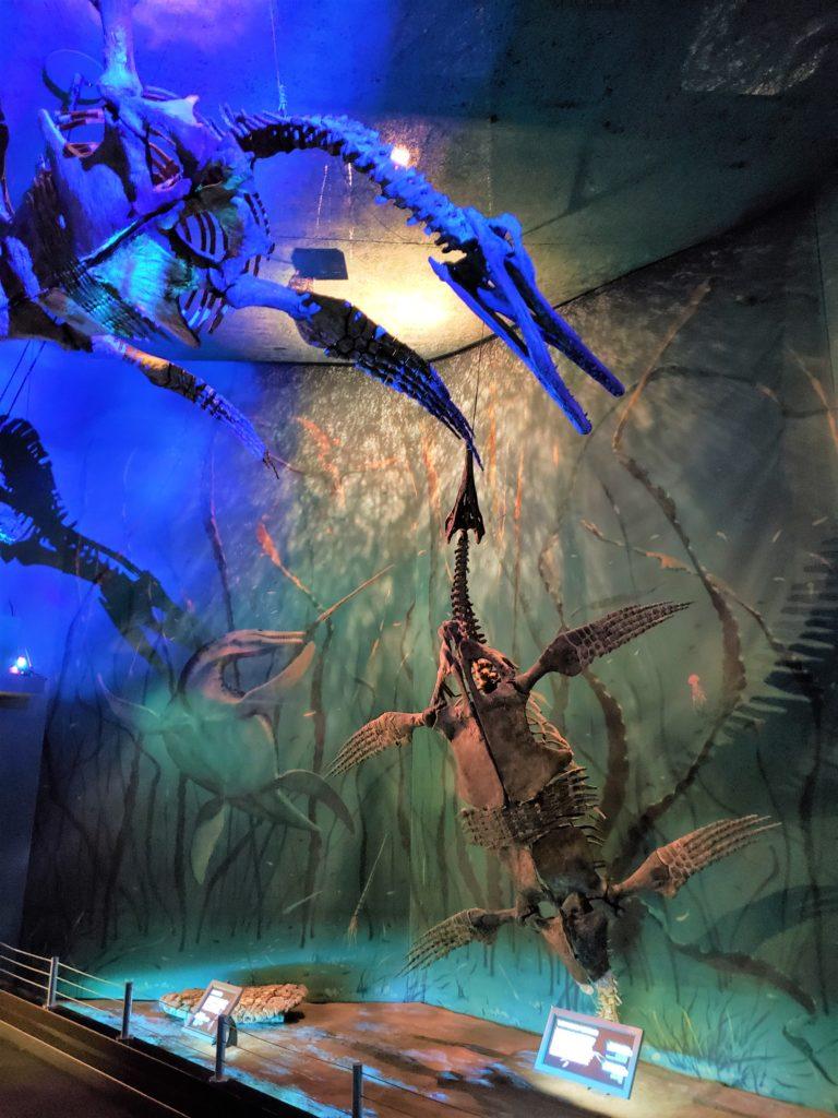 Fósiles marinos en museo Tyrrell