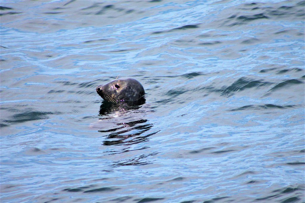 Leon marino, Sea Lions